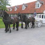 paardenkoets huwelijk