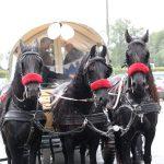 paardenkoets trouwfeest